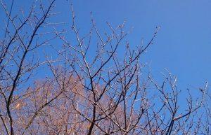 木の枝のバランス