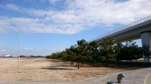 二色の浜公園の松林