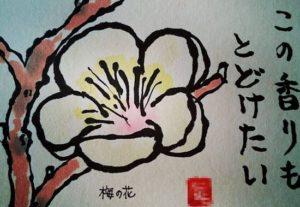 梅の花の絵手紙