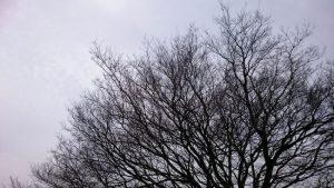 ウォーキングに見える木