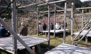 金熊寺梅林の縁台