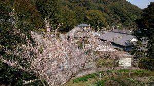 景色の良い金熊寺