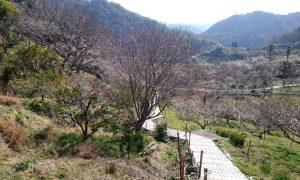 金熊寺梅林内の歩道