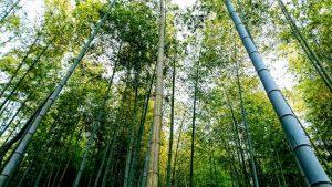 竹林は風が吹いて気持ち良い