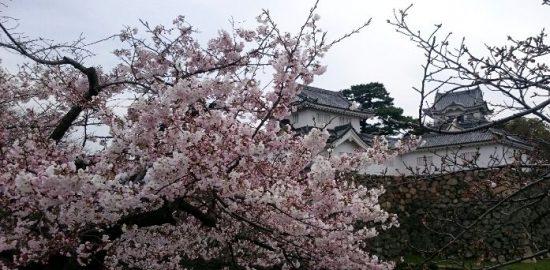 岸和田城の花見