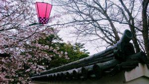 岸和田城の屋根瓦と桜