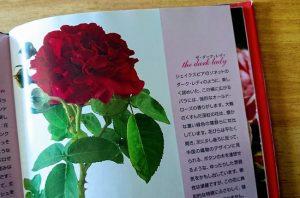 ザ・ダーク・レディという薔薇