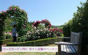 泉南・バラ園のベンチ