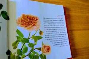 バラはクレア・ローズ