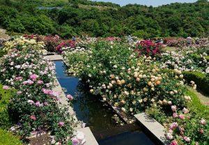 泉南・花咲きファームの水辺