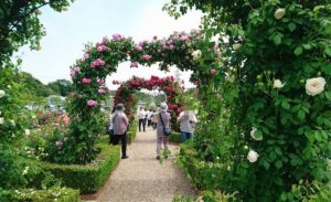 バラ園と観光客