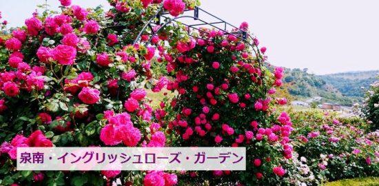 大阪の泉南のローズガーデン