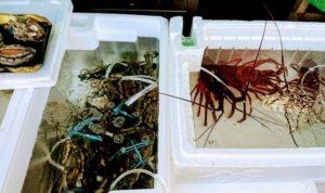田尻漁港のエビや蟹