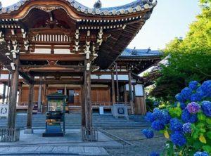 長慶寺の本堂と紫陽花