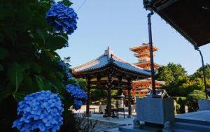 長慶寺は紫陽花がきれい