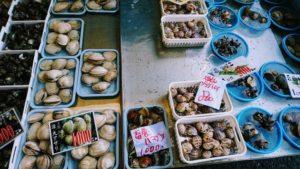 田尻漁港のいろいろな貝類