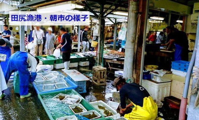 田尻漁港の朝市