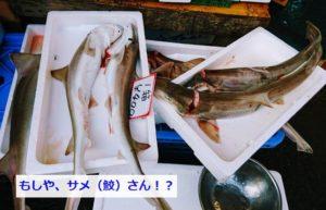 田尻漁港の市場のサメ