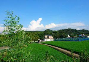 真夏の日本