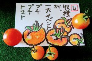 ミニトマトを絵手紙