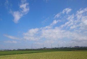 晴天と稲穂