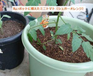 ミニトマトをマンションのベランダで栽培