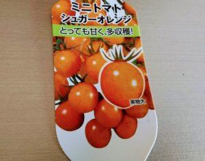 プチトマトのシュガーオレンジ