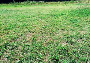 芝生の地面・広場