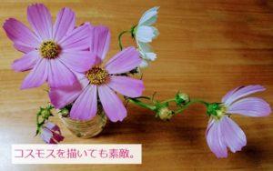 秋の花・コスモス