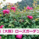 泉南ローズガーデンのバラ