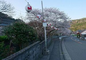 夜桜も楽しみな山中渓の桜