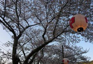 山中渓駅の桜のライトアップ
