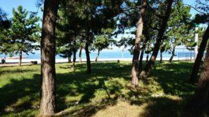マーブルビーチの松林